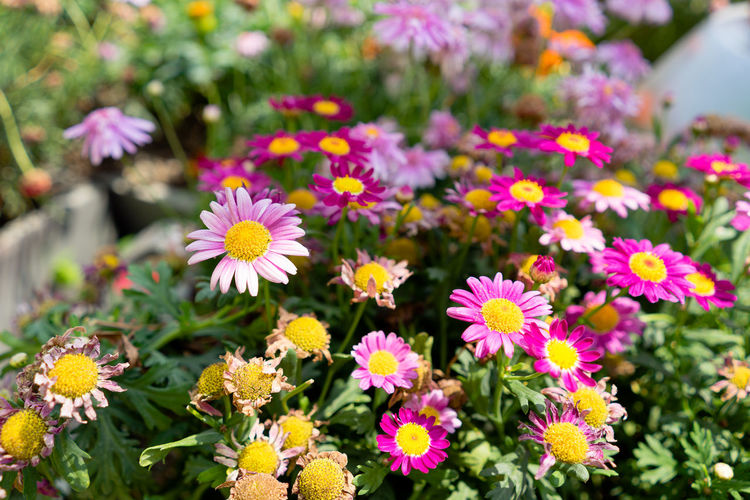 Beauty In Nature Close-up Day Floral Floral Pattern Floral Photography Flower Flower Collection Flower Head Flowerbed Flowering Plant Flowers Focus On Foreground Fragility Freshness Growth Inflorescence Nature No People Outdoors Petal Pink Color Plant Pollen Vulnerability