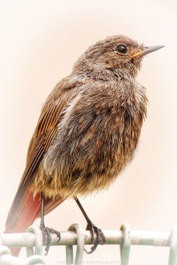 THE CASTLE XIX 'Super Model' Tadaa Community EyeEm Birds EyeEm Nature Lover Nature Collection