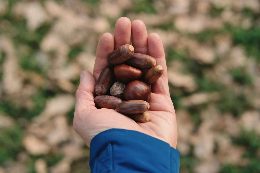 A forest in my hand... Background Forest Wood Life Chestnut Oak Nut Palm Brown Nature Seed Acorn Human Body Part Human Hand One Person Hand Holding Focus On Foreground Real People Nut Lifestyles Body Part Leisure Activity Finger Personal Perspective Outdoors Close-up High Angle View