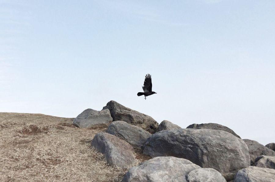 Crow Animal_collection Animal Photography EyeEm Animal Lover EyeEm Best Shots EyeEmBestPics