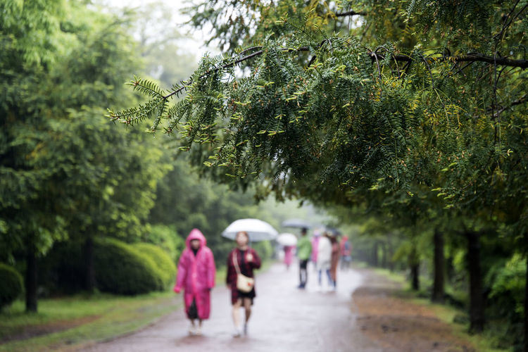 rainy day of Bijarim which is a famous forest in Jeju Island, South Korea Adult Beauty In Nature Bijarim Day Focus On Foreground Forest Green Color Growth JEJU ISLAND  Lifestyles Men Nature Outdoors People Rainy Real People The Way Forward Tree Walking Women The Great Outdoors - 2017 EyeEm Awards
