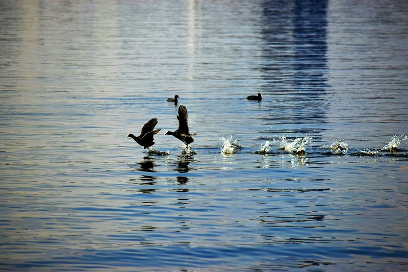 Germany Hamburg Alster April 2016 Outdoors Photography EyeEm Best Shots EyeEm Gallery Nature City Spring Bird Photography Nature In The City The Great Outdoors - 2016 EyeEm Awards