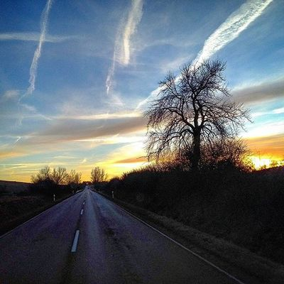 Tree Street Driving Sky Sun Sunset Clouds Heaven Shadow Shades