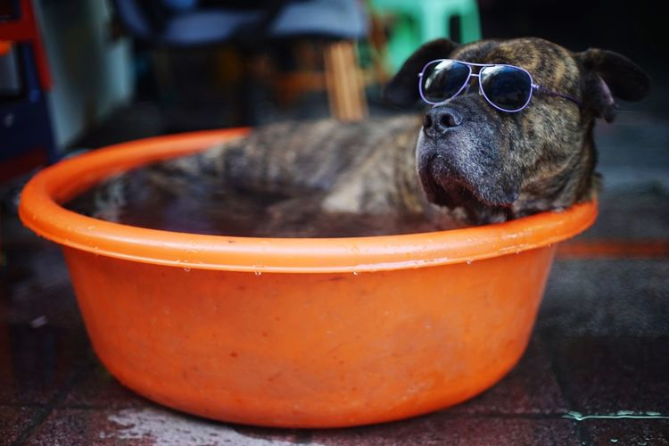 Close-up of dog sitting in bucket