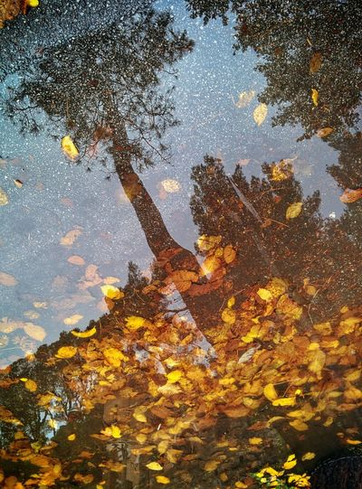 Autumn Colors Water Reflections Walking Around From My Point Of View