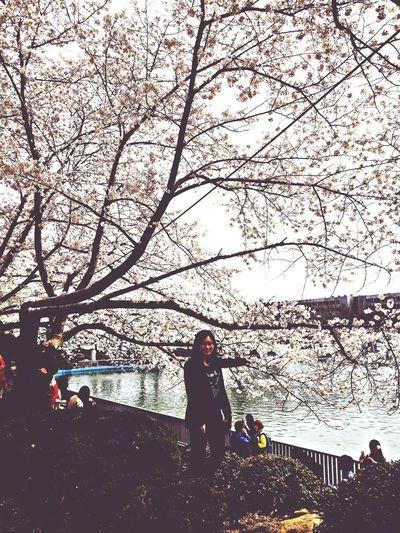 cherry blossom. awesome:)