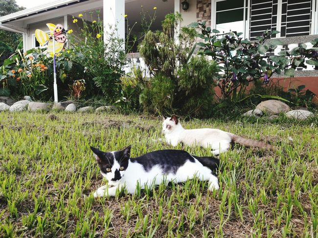 Pets Domestic Animals Animal Themes Grass Mammal Day No People Outdoors Plant Nature Garden Front Yard