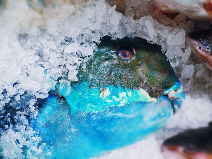 Blue Cool Fish