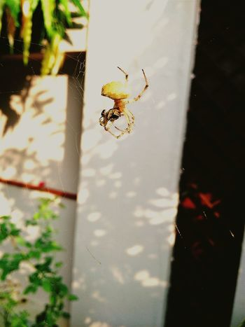 Itsy Bitsy Spider Nature_collection Naturalclick Beautiful Nature Nature On Your Doorstep Naturephotography