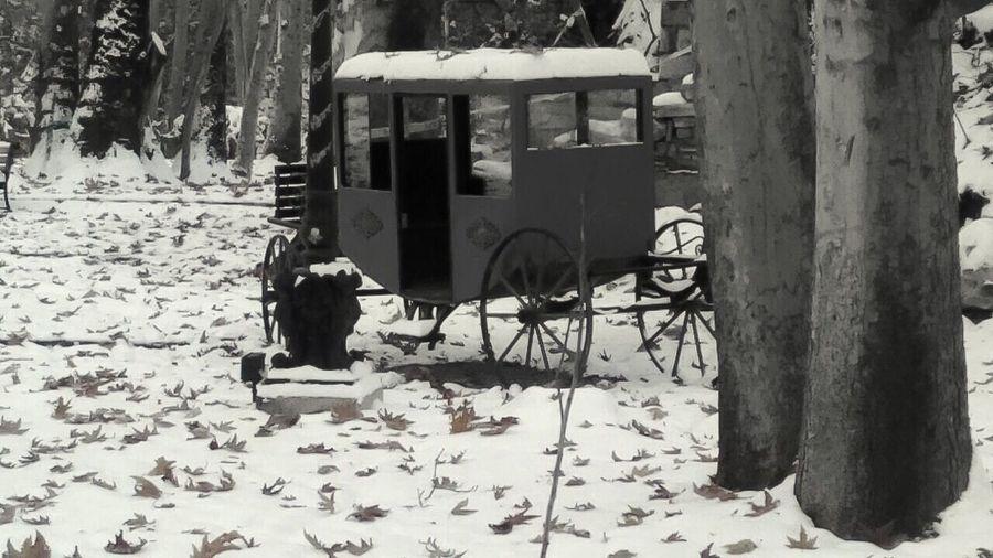 Horse cart on field