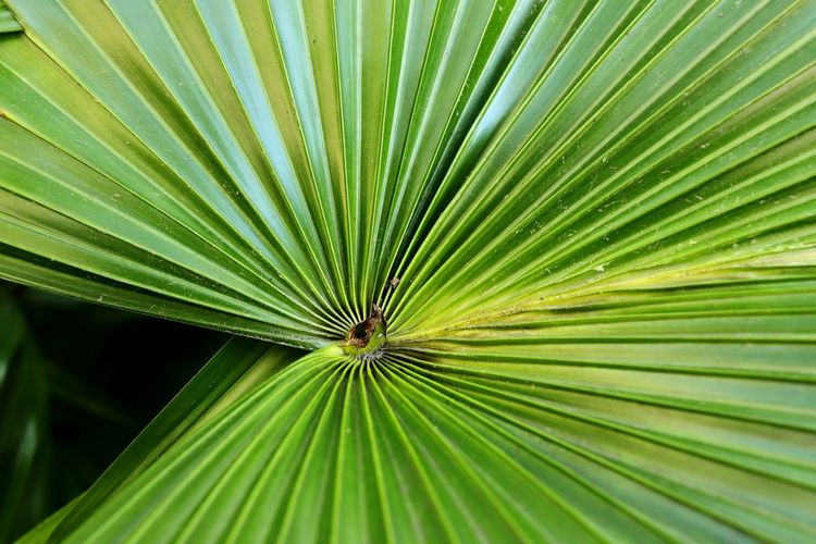 Directly above shot of palm leaf