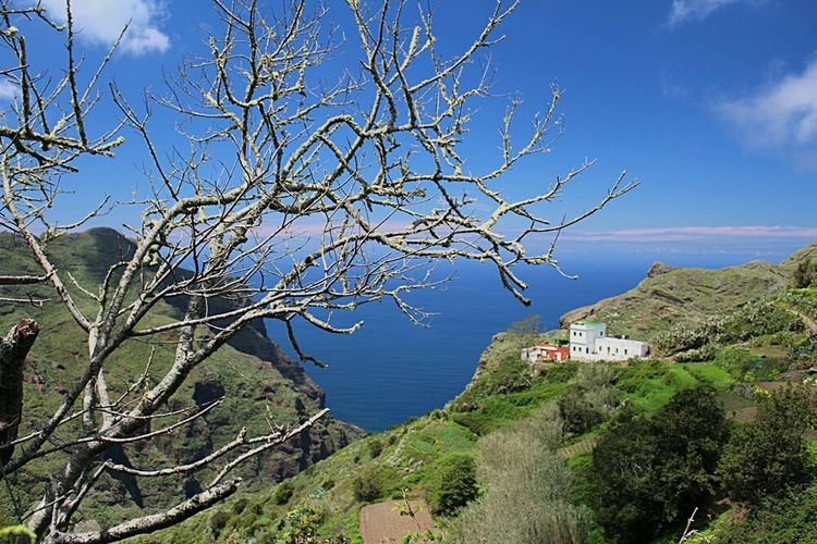 Tree Blue Horizon Over Water Tranquil Scene Nature La Palma, Canarias Canary Islands Tenerife.
