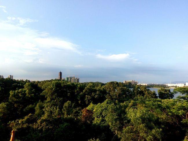 风景 Tree Cloud - Sky Sky Outdoors Day Nature No People Beauty In Nature City Politics And Government