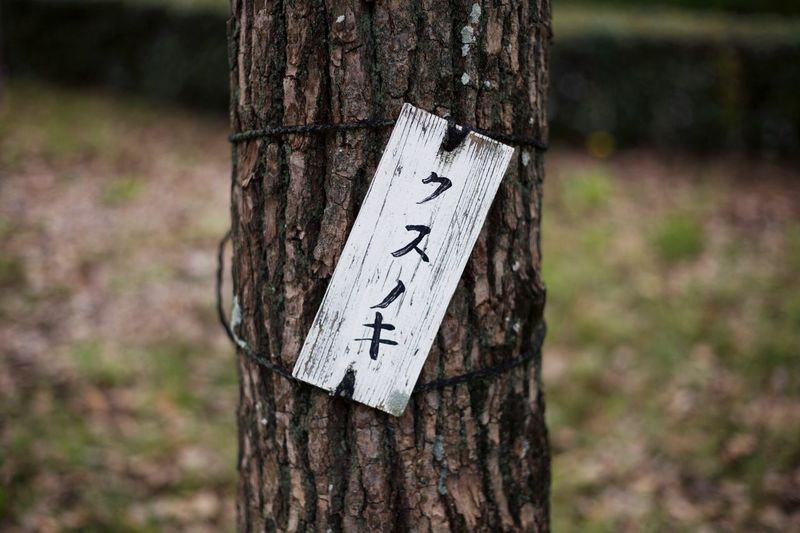 Close-up of text on tree trunk in forest