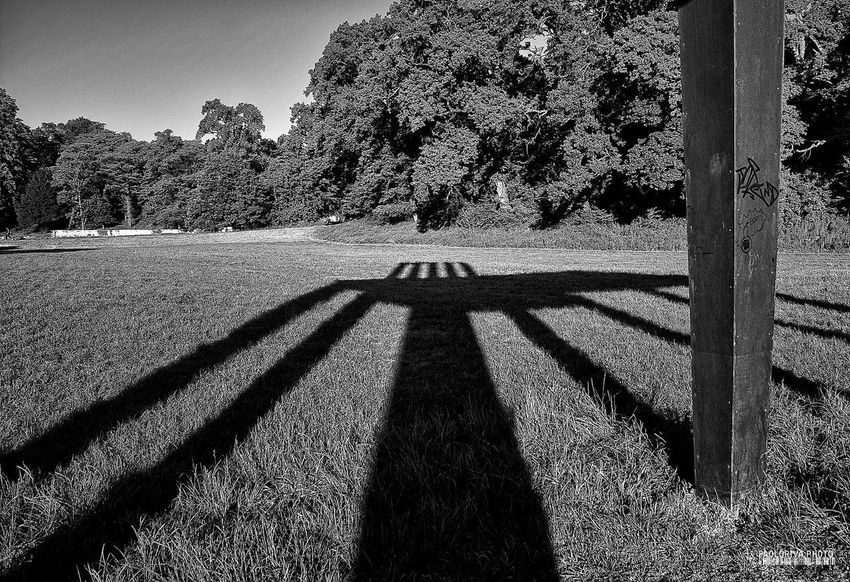 Beauty In Nature Clear Sky Day Field Focus On Shadow Growth Nature Non-urban Scene Outdoors Outline Park - Man Made Space Reggia Di Monza Remote Scenics Shadow Solitude Sunlight Tranquil Scene Tranquility Tree Tree Trunk