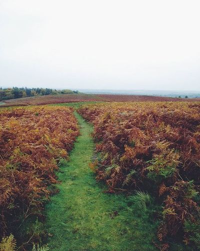 This looks like the kind of place where witchers would hunt monsters Velen Eastmidlands Leicester Nature ExploreEverything Exploretocreate Justgoshoot Bradgatepark Landscape Paths Ferns Travelgram Fantasy Thewitcher Mystical Majestic Prehistoric Medieval Vscocam