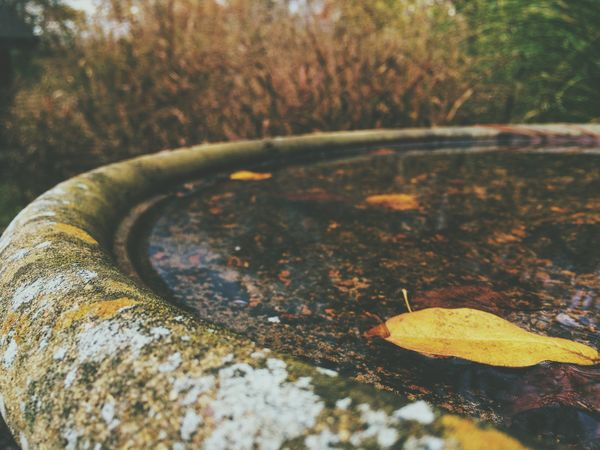 Water Leaf IPhoneography Vscocam Autumn