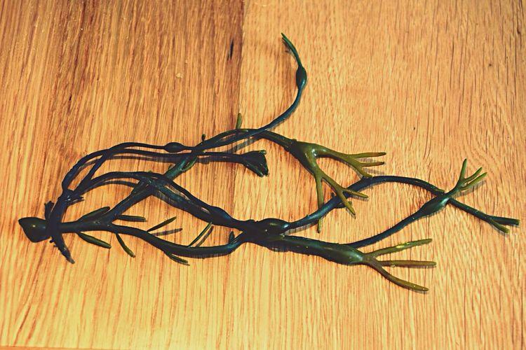 Sea weed Ocean Sea Weed Green Keys Photography