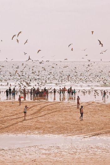 Birds Flying At Beach Against Sky