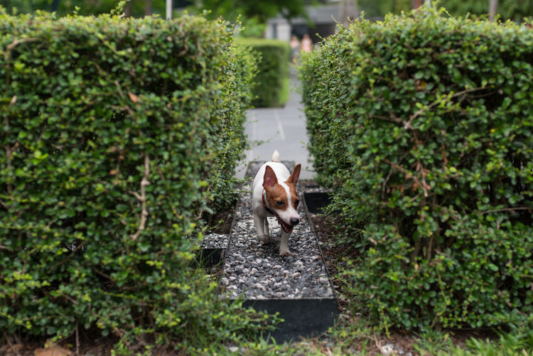 Portrait of dog on small plants,jack russell terier.