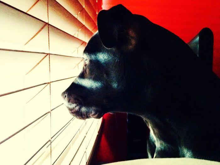 El perro fisgón