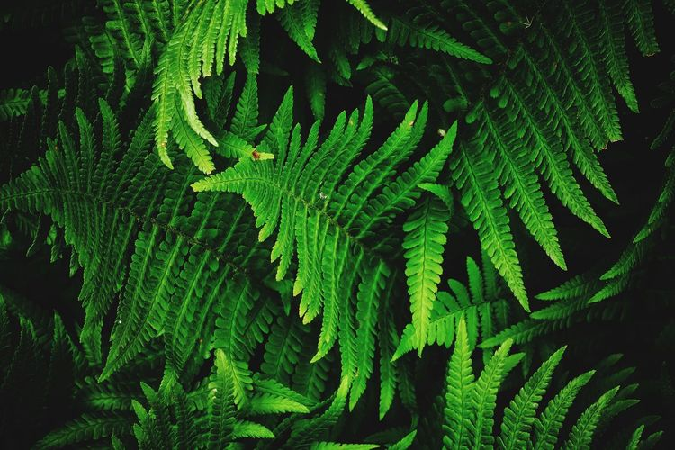 Fern darkness and light secret garden Nature_collection Nature Photography Nature Grass Green First Eyeem Photo EyeEm Nature Lover Tree Leaf Branch Fern Backgrounds Close-up Plant Green Color Leaf Vein Growing Leaves Plant Life Petal Change Young Plant