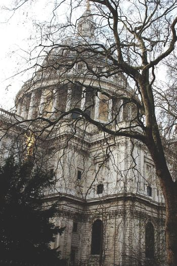 St Pauls Cathedral London Trees