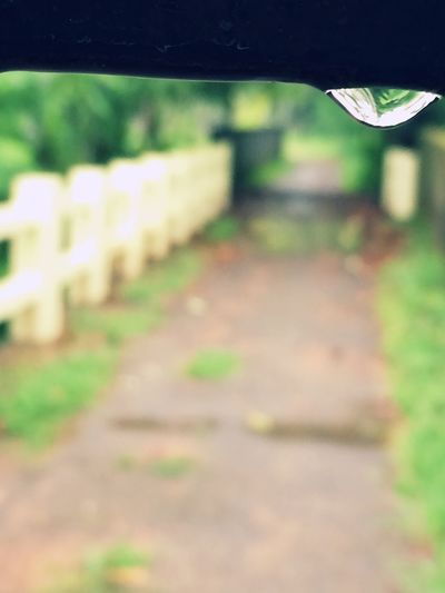 Raindrops Raindrops😍😍its the gate of my home❤️PLUVIOPHILE:There Is A Quiet Beauty Found In Nature When Heaven Weeps👌😉 Pluviophile RainDrop Kerala The Gods Own Country ;) there is nothing like home😅😍 Home Is Where The Art Is Home Sweet Home EyeEmNewHere EyeEmNewHere
