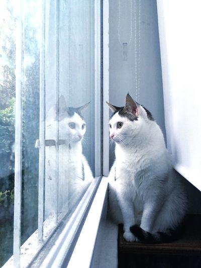 Gato y su