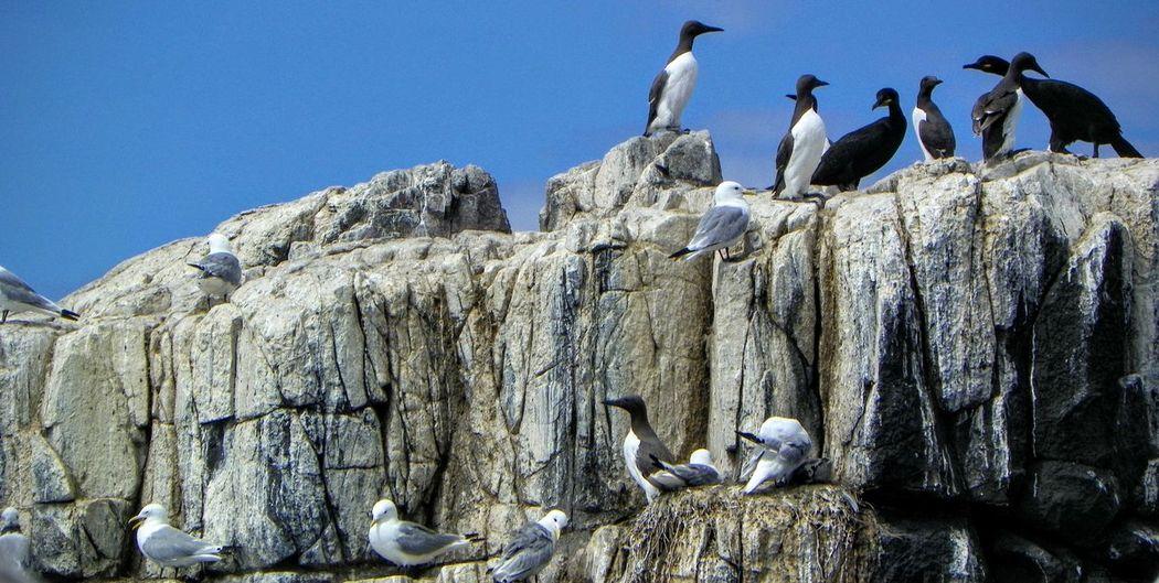 Clouds And Sky Farne Islands Guano Islandlife Nesting Rocks RSPB Sealifeaquarium