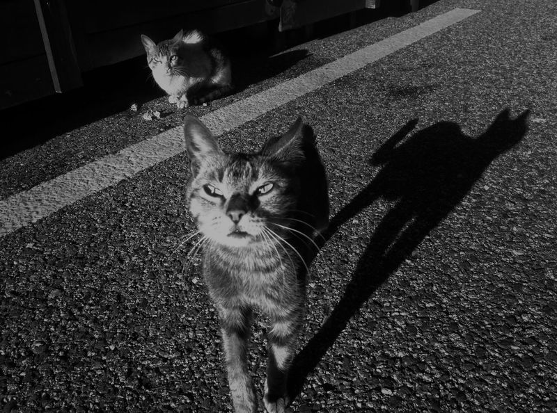 Cats's shadows Blackandwhite Bw_collection Stretphotography Streetphotography EyeEm Best Shots EyeEm Best Edits