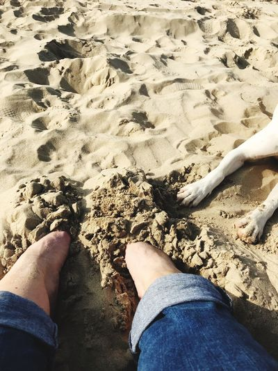Feed and paws Pointer Mix Paws Dog Body Part Low Section Human Leg Human Body Part Real People Sand Lifestyles Beach Jeans Day Outdoors Casual Clothing Women One Person