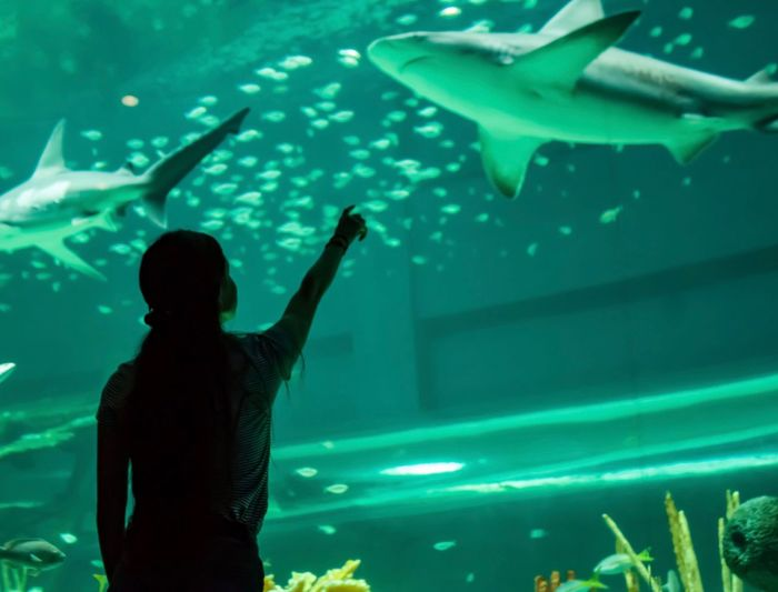 Woman pointing towards shark in aquarium
