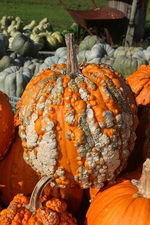 Halloween Pumpkin Market Orange Color Close-up Food And Drink Squash - Vegetable Gourd