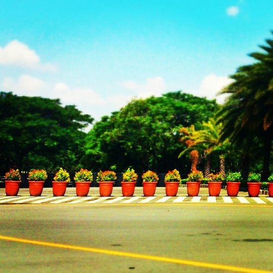 Road blocks. Filinvest Alabang Road Flowerpots patterns picoftheday joggerslane igers igersmanila notraffic