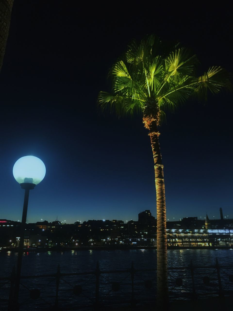 Palm Trees By Sea Against Sky At Night