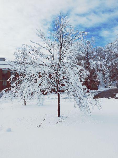Winter Snow New England