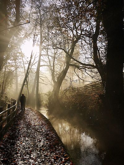 Rear view of silhouette man standing by river in forest