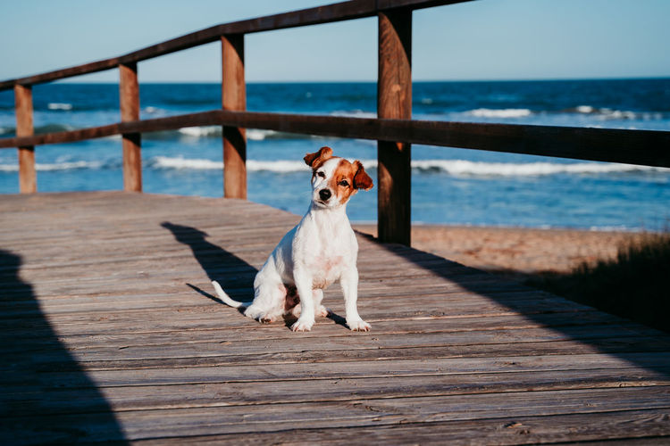 Portrait of dog sitting on boardwalk at beach