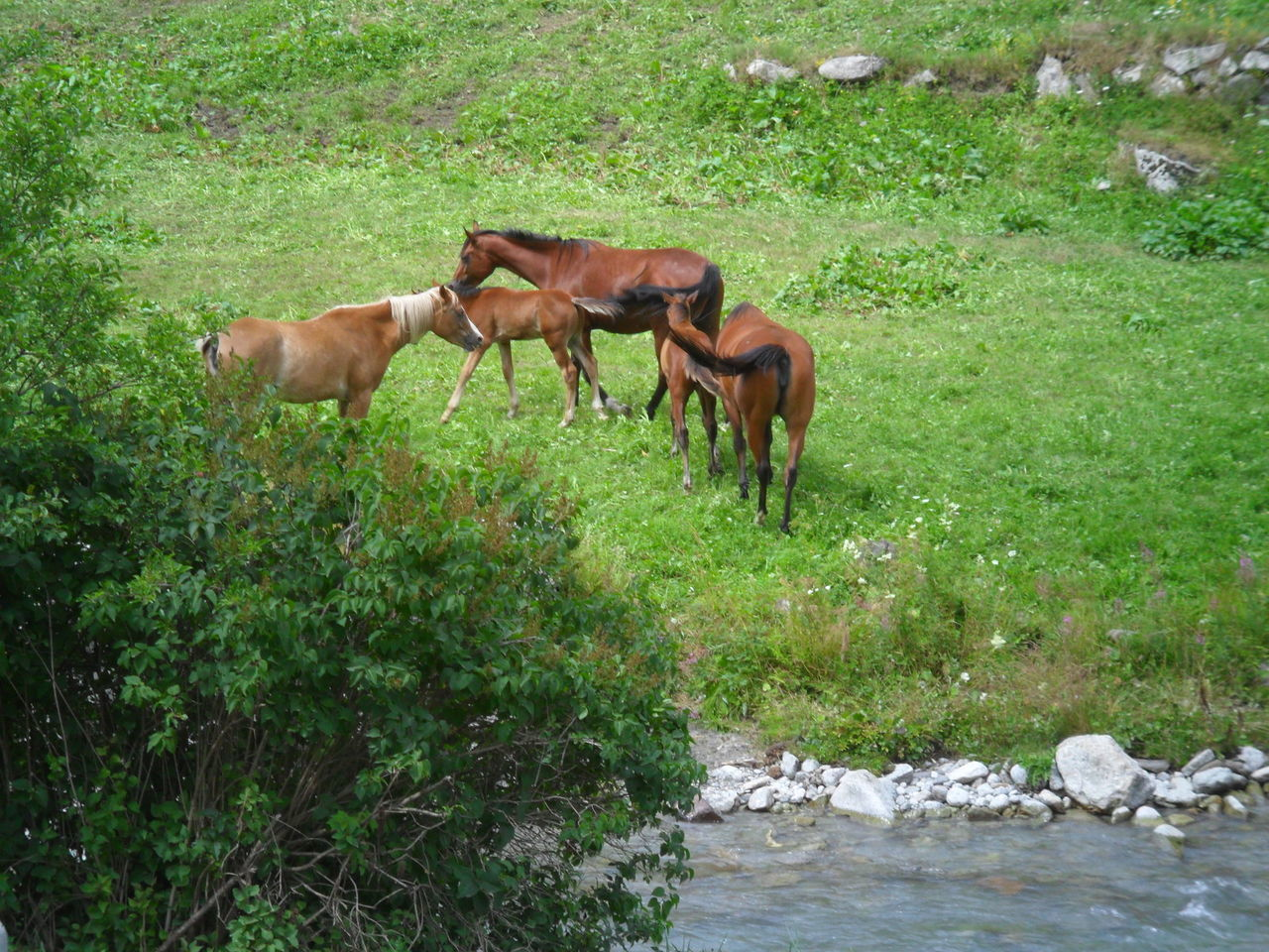 HORSES STANDING ON FIELD BY PLANTS