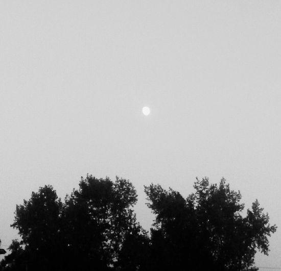 Black And White Nature La Luna Black & White