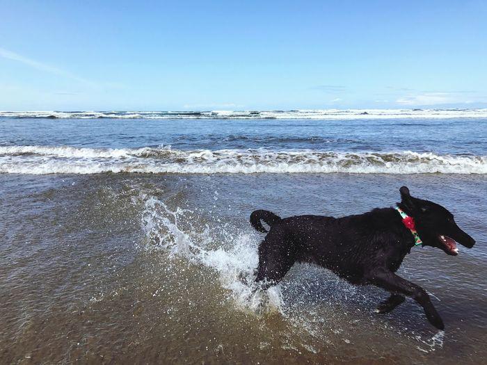 Dog Pets Sea