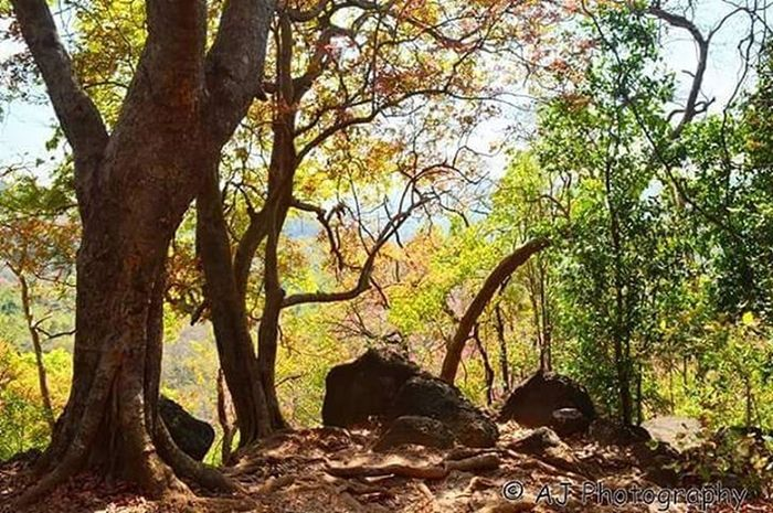 Forest Nature Photography_best_capture
