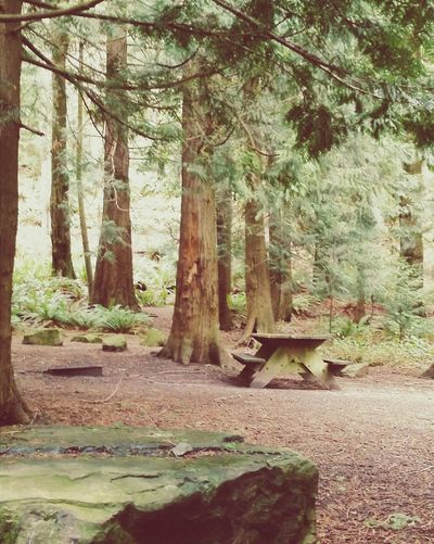 PNW Cascadia Upperleftusa