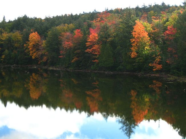 Huntsville, Canada. Mizzy Lake Trial. Unforgettable day. Autumn Beauty In Nature Canada Canadian Autumn Change Growth Huntsville Idyllic Lake Nature No People Non-urban Scene Orange Color Reflection Scenics Season  Standing Water Tranquil Scene Tranquility Tree Water Reflections