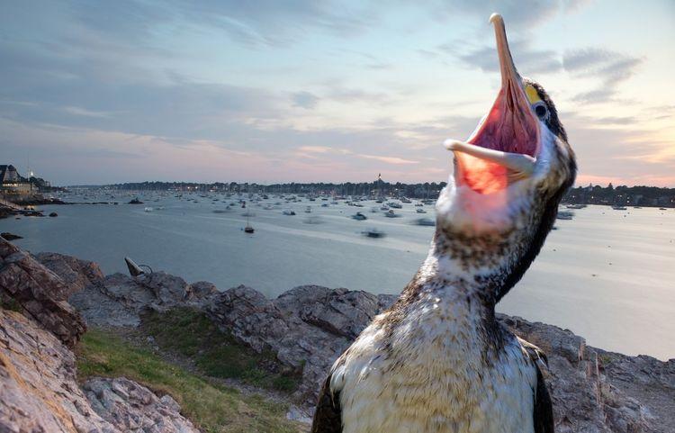 The laughing shag. Beauty In Nature Bird Coastline Cormorant  Laughing Cormorant Laughing Shag Nature No People Ocean Scenics Sea Sea Bird Shag
