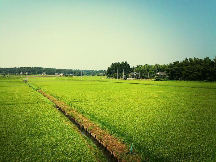 多分…ね。美しい日本の風景。即、下車したい! Summertime Beautiful Japan 25daysofsummer