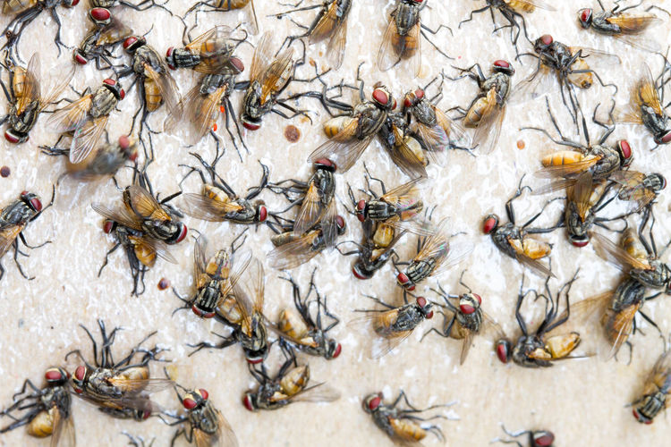 Full Frame Shot Of Dead Houseflies