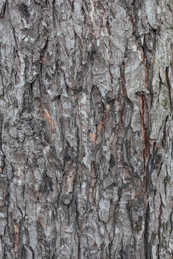 Oberfläche Backgrounds Close-up Day Full Frame Gray Nature No People Outdoors Pattern Raster Rough Structure Textured  Tree