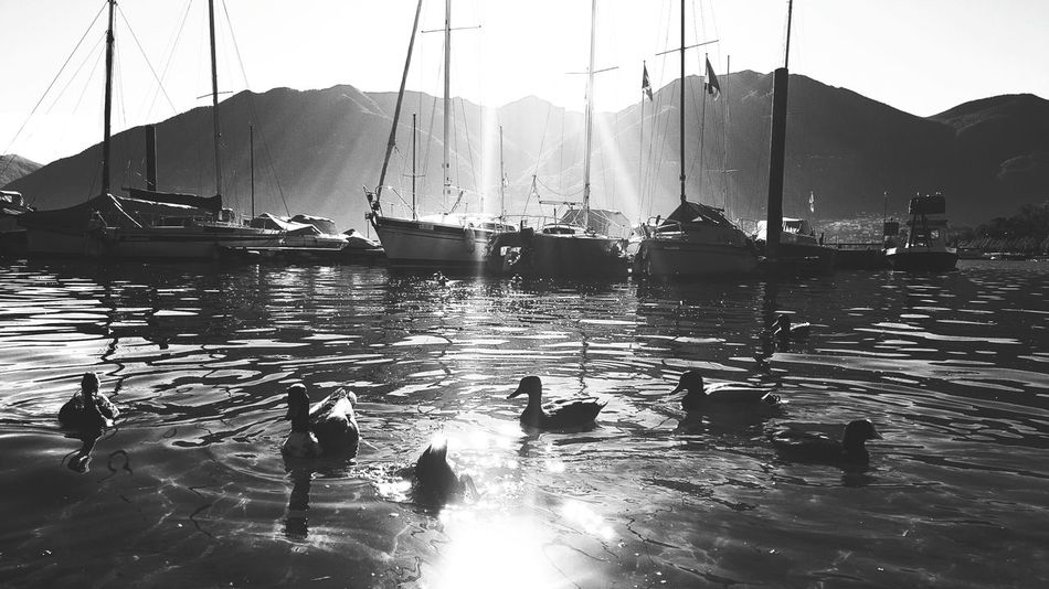 @being_simple Water Lake Sun Sunlight Black And White Monochrome Shadow Catching Light Catching The Sun light and reflection Ducks Ducks At The Lake Boats⛵️